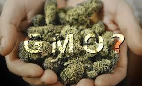 cannabis-1